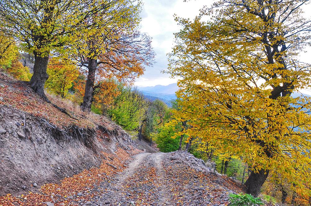Hyrcanian forest, Shahrud region