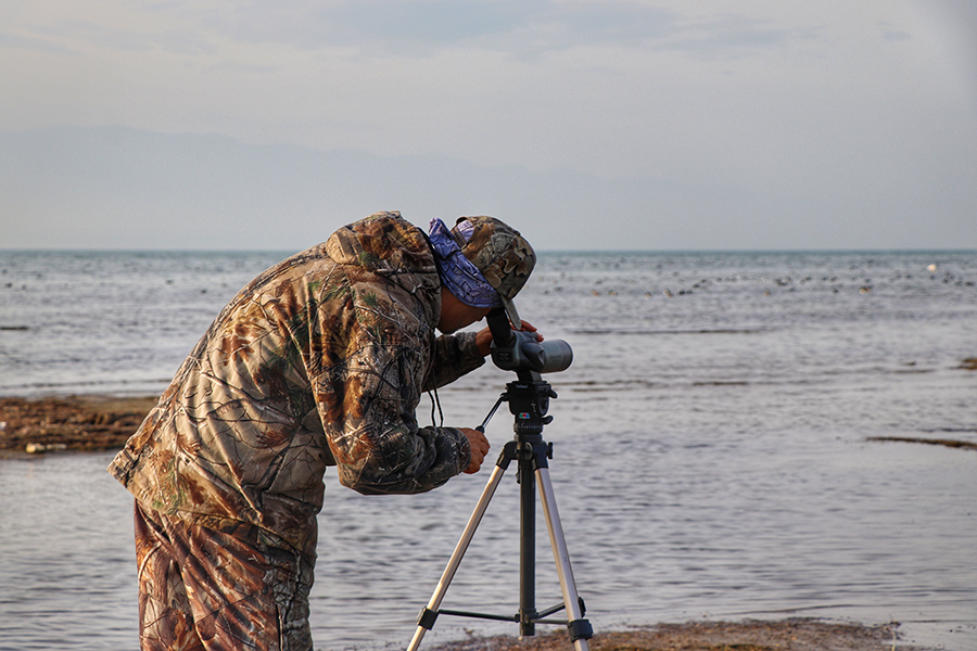 Birdwatching experience in Iran
