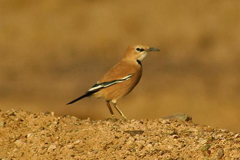 Birdwatching in Varzaneh, Cross Isfahan to Yazd