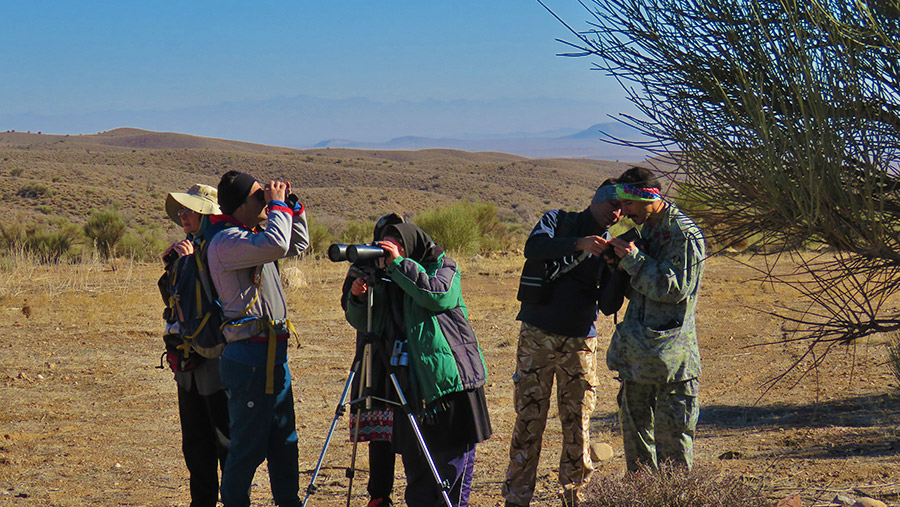 Bird watching or Birding in Yazd desert