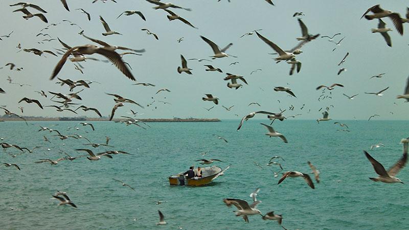 bushehr shore in the Persian Gulf