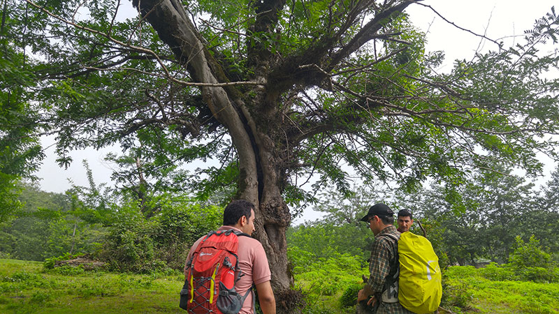 Green Hike of Gilan
