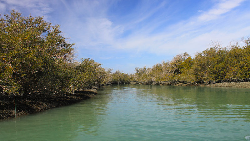 Harra mangrove forest in Qeshm