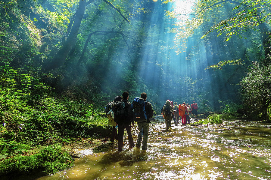 Hiking Hyrcanian forests of north Iran