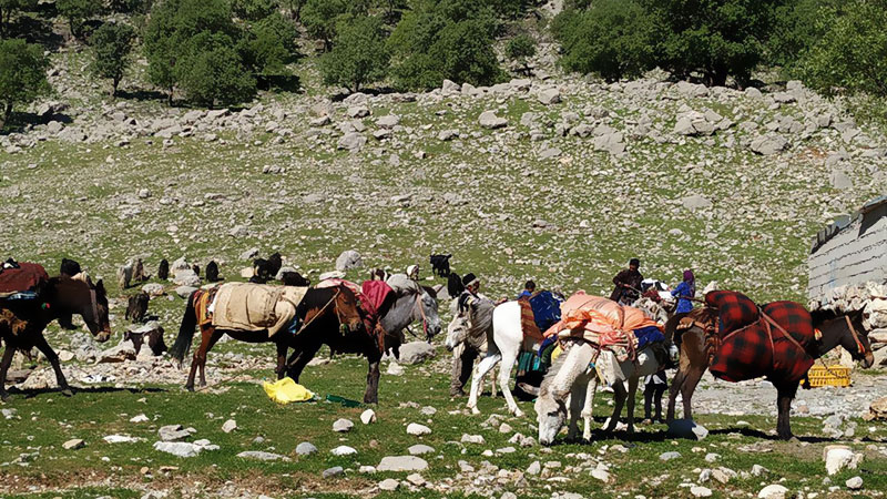 iran nomad seasonal migration