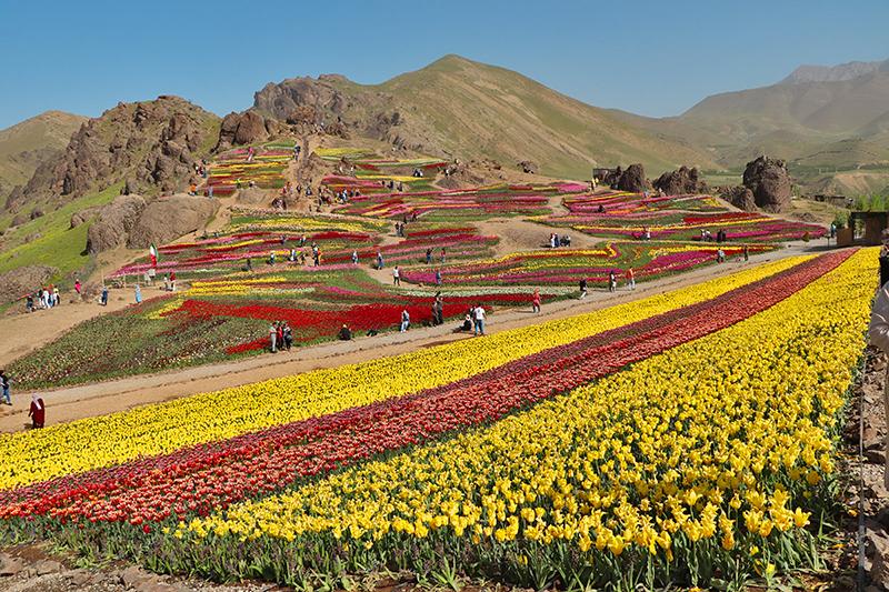 lezoor tulip garden