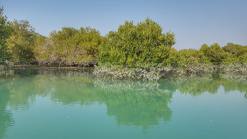 Harra Marine forest of Qeshm