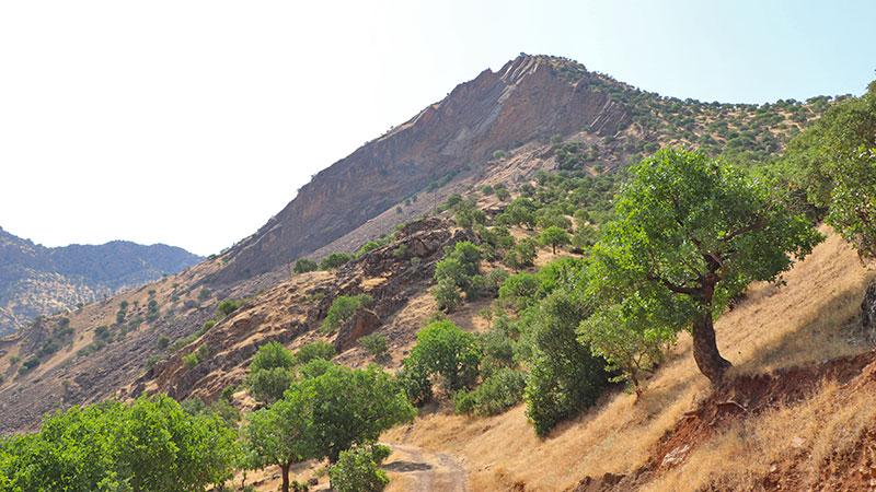 iranian kurdistan nature, oak forest