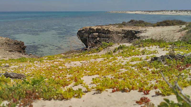 Maru, Shidvar island in the Persian Gulf