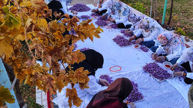 saffron is a culture in Iran, Khorasan