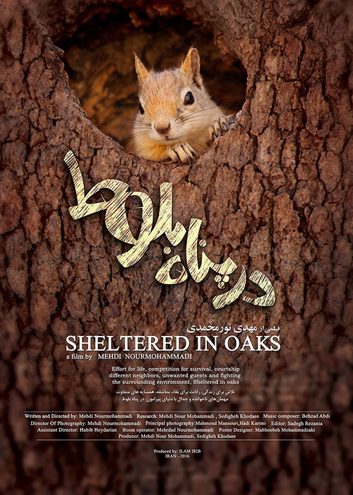 sheltered in oak tells the story of the iran west nature