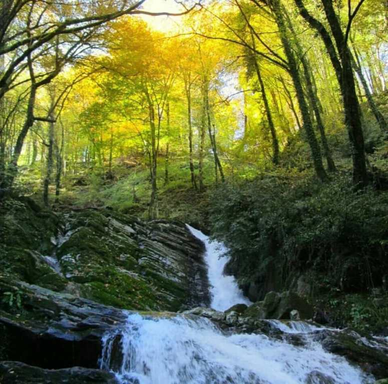 nature of Gilan and ancient Hyrcanian forests